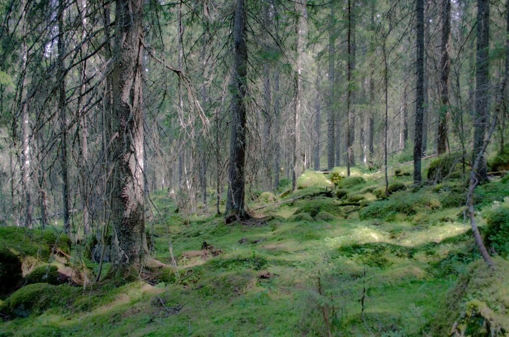 blybergets naturreservat
